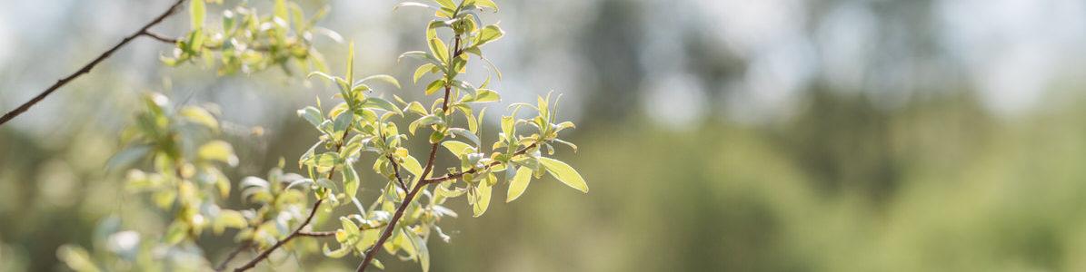 Naturheilpraxis-Lebenszeit_Heilpilztherapie