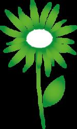 Naturheilpraxis-Lebenszeit_Blume_Komplexhomöopathie
